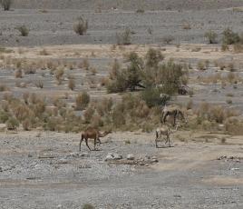 Firq wadi 10