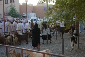 Goat Market 4